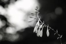 flower526-3
