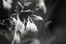 flower527-3