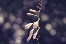 flower528-2