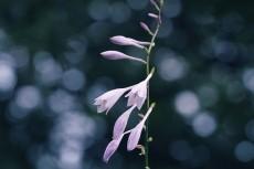 flower528