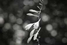 flower528-3
