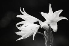 flower529-2