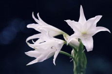 flower529