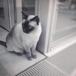 【高解像度】街角の猫