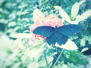 【高解像度】赤い花とクロアゲハ
