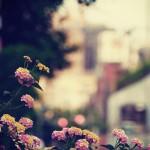 【高解像度】ランタナが咲く道の夕暮れ(3パターン)