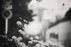 scenery320-3