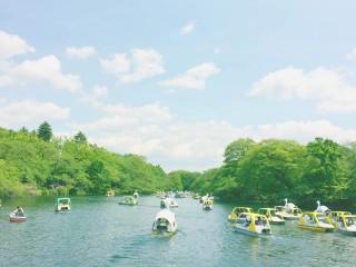 【高解像度】池上を漕ぎ出すボート