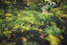 scenery341