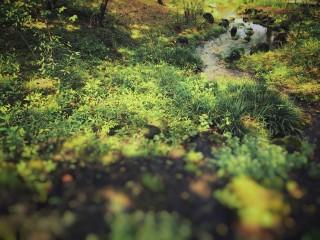 【高解像度】小川と木漏れ日
