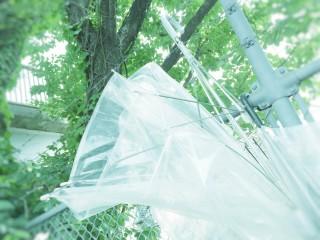 【高解像度】生い茂る緑と壊れた傘