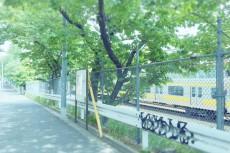 scenery351