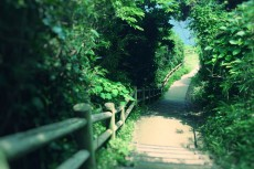 scenery366