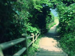 【高解像度】夏に向かう道