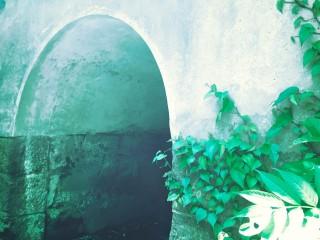 【高解像度】蔦の這うトンネル
