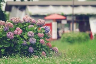 【高解像度】紫陽花と赤い和傘のある風景(3パターン)