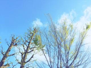 【高解像度】雨上がりの空