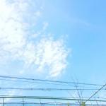 【高解像度】電線と穏やかな空