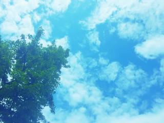 【高解像度】晴れた空と木