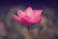 flower533-2