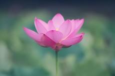 flower533