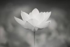 flower533-3