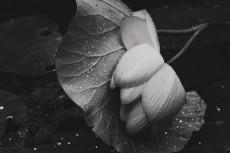 flower536-3
