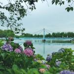 【高解像度】紫陽花に縁どられた景色