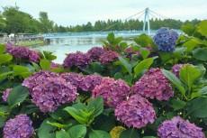 flower541