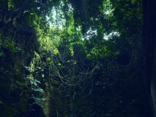 【高解像度】蔦が蔓延る洞穴