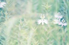 flower550