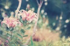flower551-2