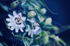 flower554