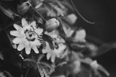 flower554-3