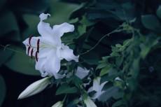 flower555