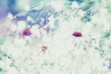 flower556-2