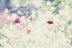 flower556