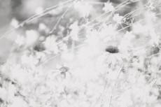 flower556-3