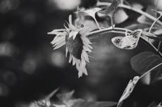 flower558-3