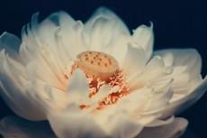 flower560-2