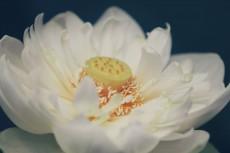 flower560