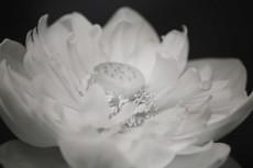 flower560-3