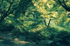 scenery382-2