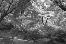 scenery382-3