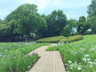【高解像度】菖蒲田の木道