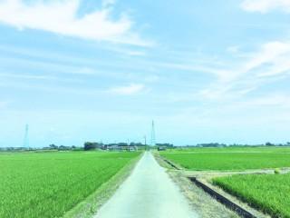 【高解像度】水田と一本道