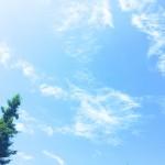 【高解像度】晴れた空と一本の木