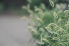 flower561-2