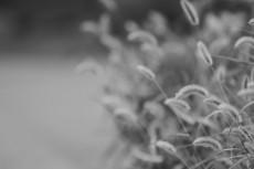 flower561-3
