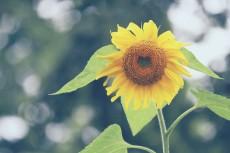 flower562_2-2